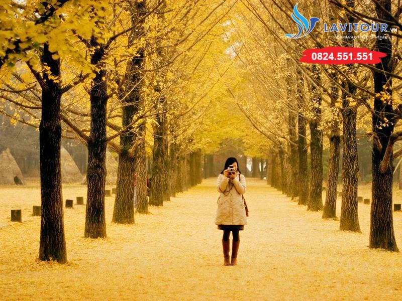 Tour Hàn Quốc - Seoul - Nami - Everland 4n4đ 10