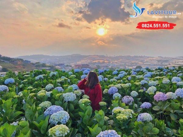 Tour Đà Lạt - Phan Thiết - Mũi Né 4n3đ 5