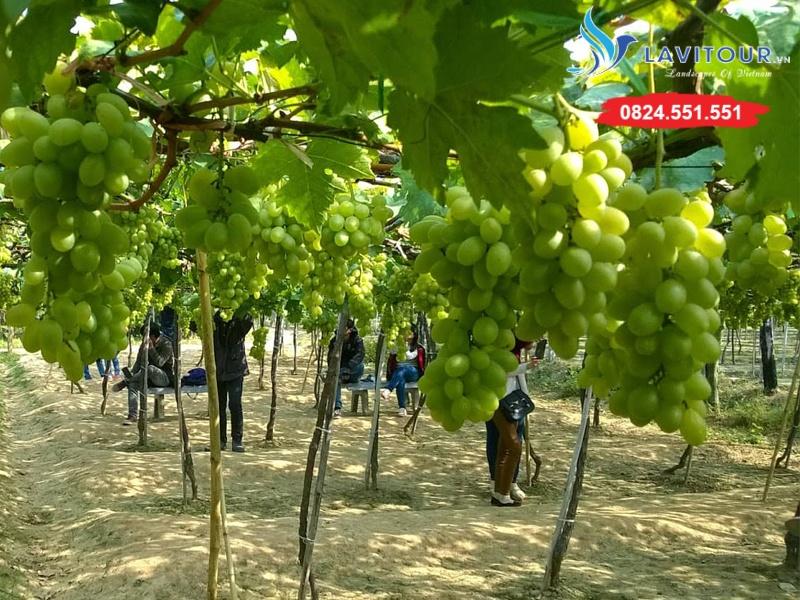 Tour Ninh Chữ - Hang Rái - Vịnh Vĩnh Hy 3n2đ 7