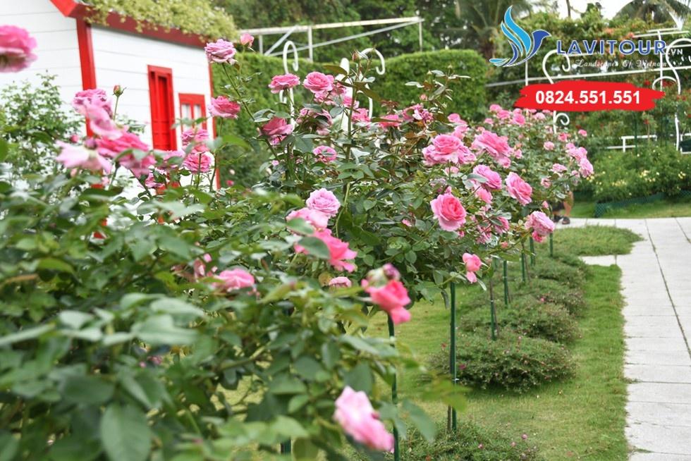 Vườn hoa đẹp tại Sài Gòn